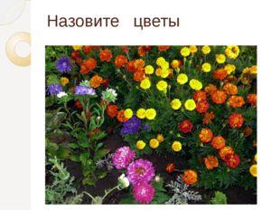 Назовите цветы