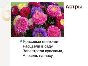 Астры Красивые цветочки Расцвели в саду, Запестрели красками, А осень на н