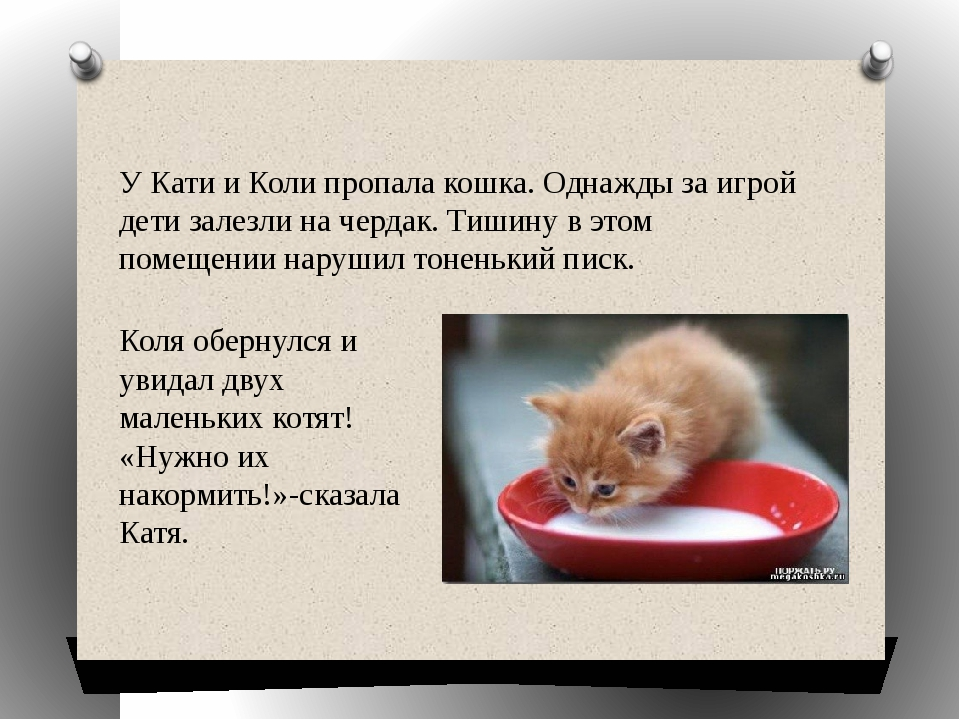 Коля обернулся и увидал двух маленьких котят! «Нужно их накормить!»-сказала К...