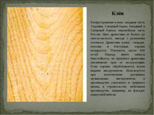 Клён Распространение клена: западная часть Украины, Северный Крым, Западный и