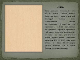 Липа Распространение: Европейская часть России, Кавказ, Дальний Восток. Древе