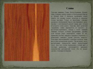 Слива Торговые названия: Слива. Распространение: Нижняя Азия.(Сливовое дерево