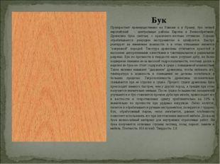 Бук Произрастает преимущественно на Кавказе и в Крыму; бук лесной европейский