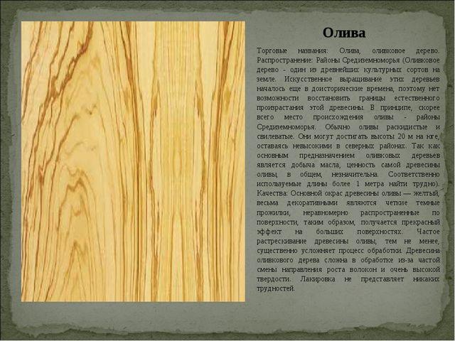 Олива Торговые названия: Олива, оливковое дерево. Распространение: Районы Сре...