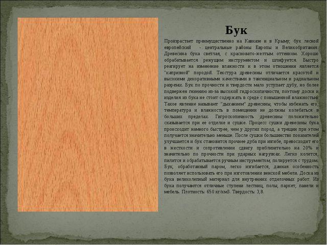Бук Произрастает преимущественно на Кавказе и в Крыму; бук лесной европейский...