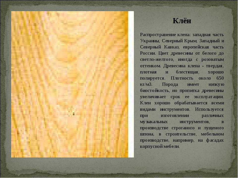 Клён Распространение клена: западная часть Украины, Северный Крым, Западный и...
