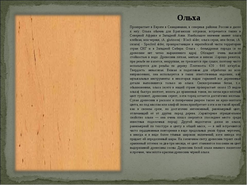 Ольха Произрастает в Европе в Скандинавии, в северных районах России и далее...