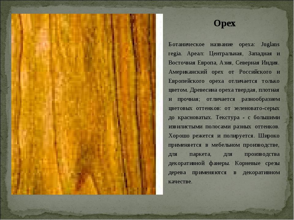 Орех Ботаническое название ореха: Juglans regia. Ареал: Центральная, Западная...