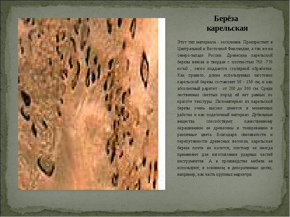 Берёза карельская Этот тип материала - эксклюзив. Произрастает в Центральной...