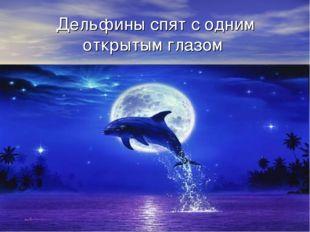 Дельфины спят с одним открытым глазом