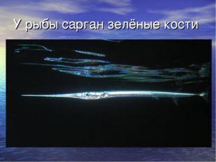 У рыбы сарган зелёные кости