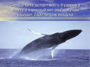 Сердце кита делает всего 9 ударов в минуту и взрослый кит за 2 секунды вдыхае