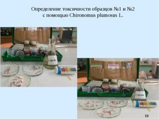 Определение токсичности образцов №1 и №2 с помощью Chironomus plumosus L.
