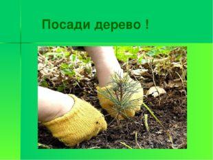 Посади дерево !