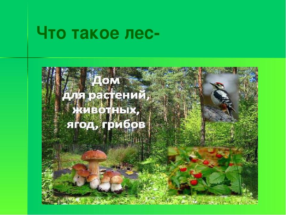 Что такое лес-