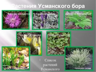 Растения Усманского бора Список растений Усманского бора включаетболее тыся