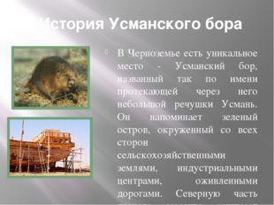 История Усманского бора В Черноземье есть уникальное место - Усманский бор, н