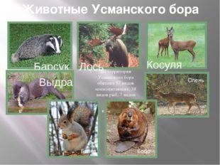 Животные Усманского бора На территории Усманского бора обитают 57 видов млеко