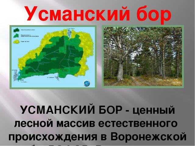 Усманский бор  УСМАНСКИЙ БОР - ценный лесной массив естественного происхожде...