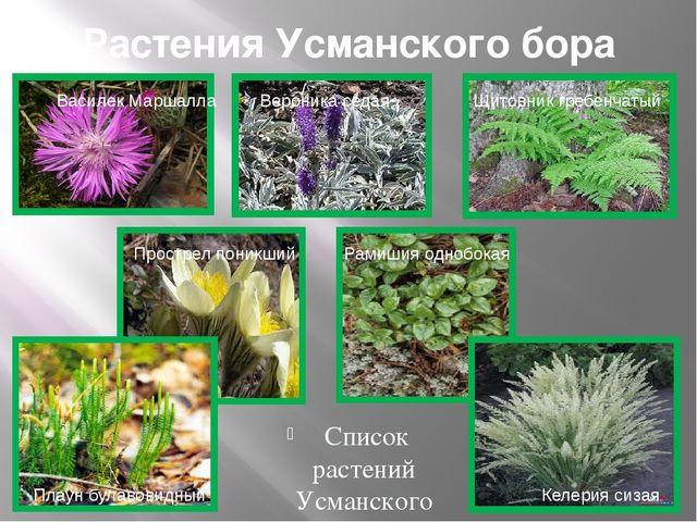 Растения Усманского бора Список растений Усманского бора включаетболее тыся...