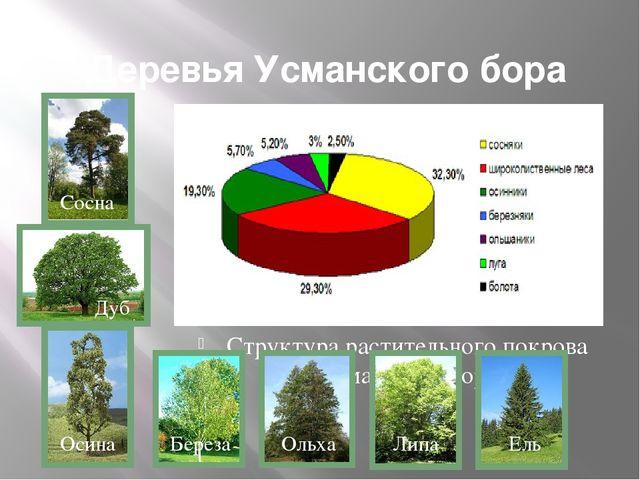 Деревья Усманского бора Структура растительного покрова Усманского бора Сосна...
