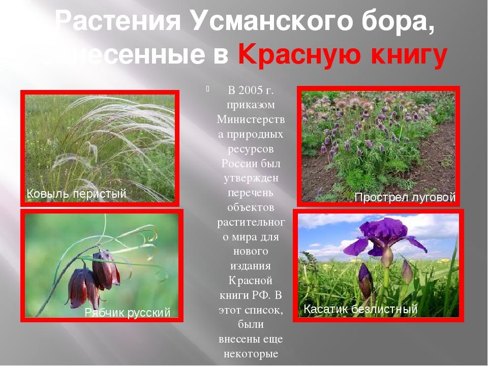 Растения Усманского бора, занесенные в Красную книгу В 2005 г. приказом Минис...