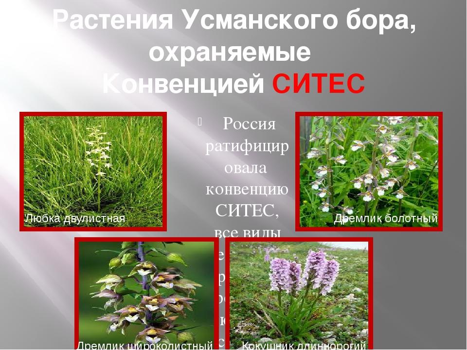 Растения Усманского бора, охраняемые Конвенцией СИТЕС Россия ратифицировала к...