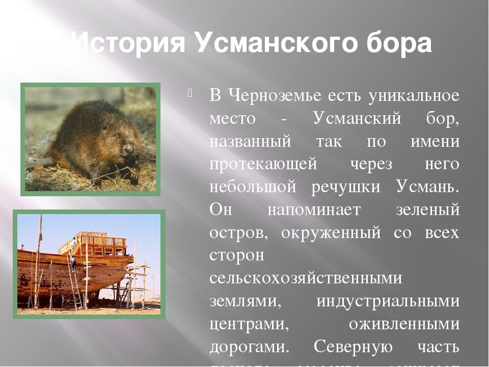 История Усманского бора В Черноземье есть уникальное место - Усманский бор, н...