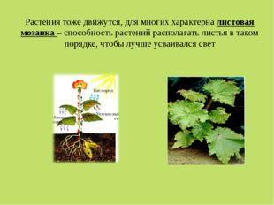 Растения тоже движутся, для многих характерна листовая мозаика – способность