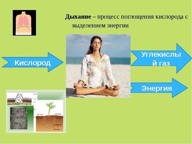 Дыхание – процесс поглощения кислорода с выделением энергии Кислород Углекис...
