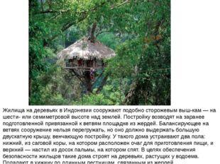 Жилища на деревьях в Индонезии сооружают подобно сторожевым выш-кам — на шест