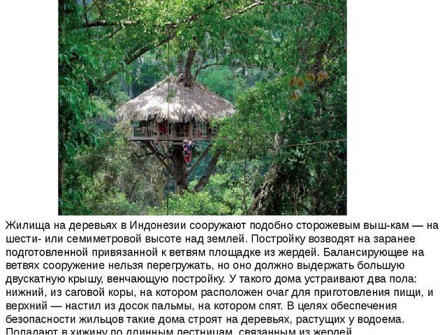 Жилища на деревьях в Индонезии сооружают подобно сторожевым выш-кам — на шест...