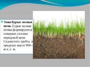 Зона бурых лесных почв. Бурые лесные почвы формируются на северных склонах пе