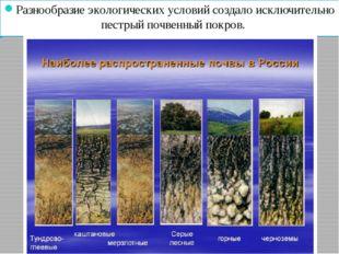 Разнообразие экологических условий создало исключительно пестрый почвенный по