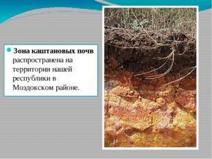 Зона каштановых почв распространена на территории нашей республики в Моздокск