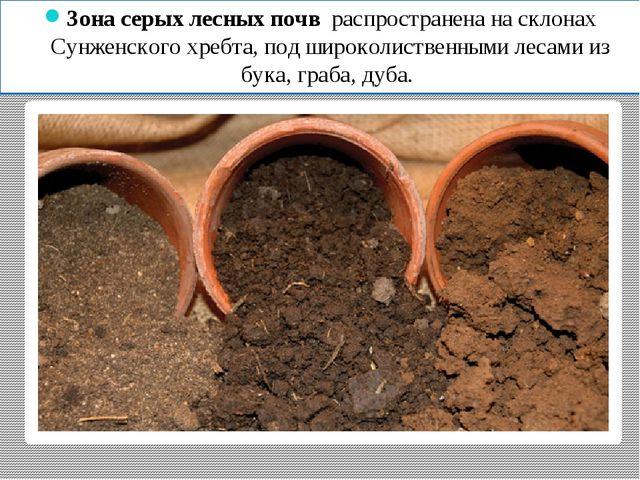 Зона серых лесных почв распространена на склонах Сунженского хребта, под широ...