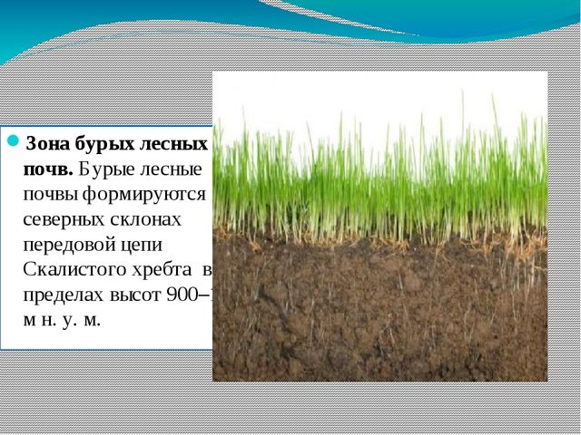 Зона бурых лесных почв. Бурые лесные почвы формируются на северных склонах пе...