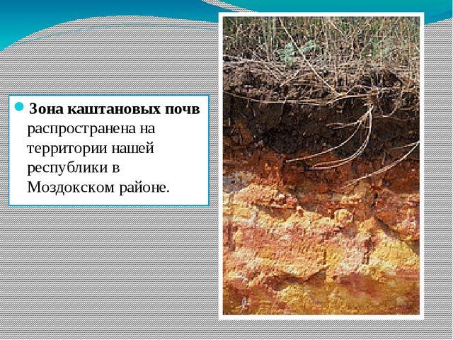 Зона каштановых почв распространена на территории нашей республики в Моздокск...