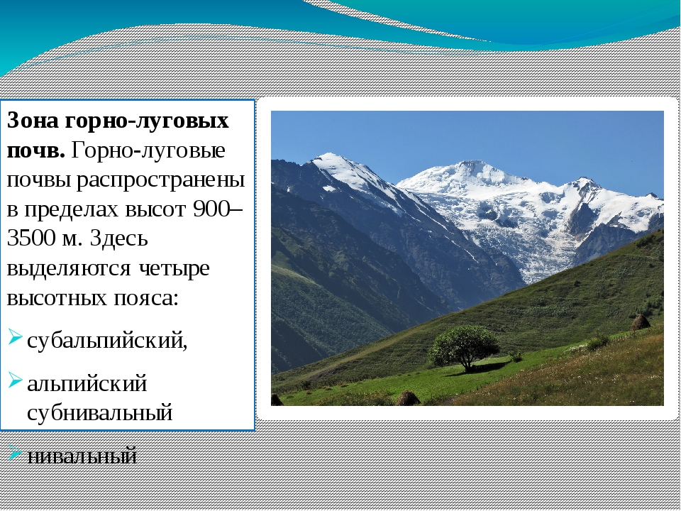 Зона горно-луговых почв. Горно-луговые почвы распространены в пределах высот...