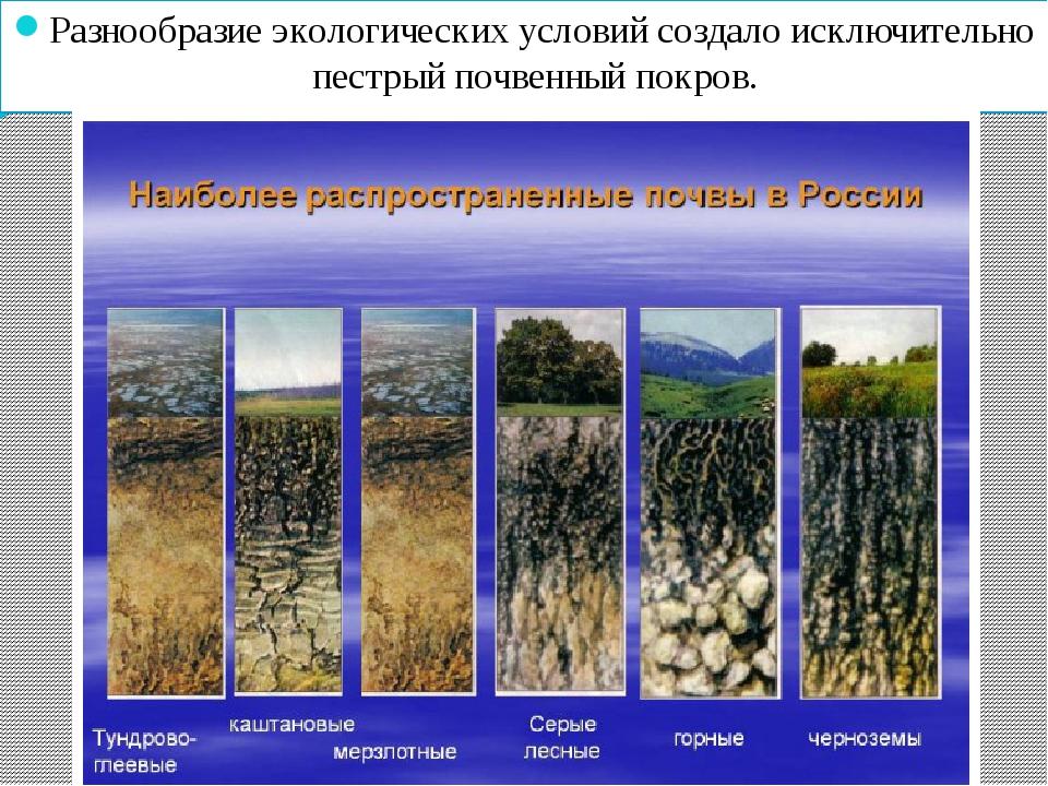 Разнообразие экологических условий создало исключительно пестрый почвенный по...