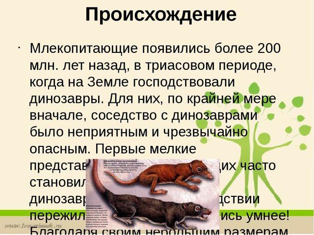 Реферат по биологии на тему Млекопитающие  Происхождение Млекопитающие появились более 200 млн лет назад в триасовом п