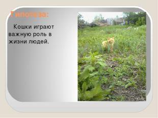 Гипотеза: Кошки играют важную роль в жизни людей.