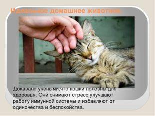 Идеальное домашнее животное. Доказано учёными,что кошки полезны для здоровья.