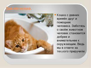 Заключение. Кошка с давних времён друг и помощник человека. Заботясь о своём