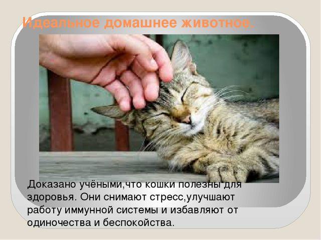 Идеальное домашнее животное. Доказано учёными,что кошки полезны для здоровья....