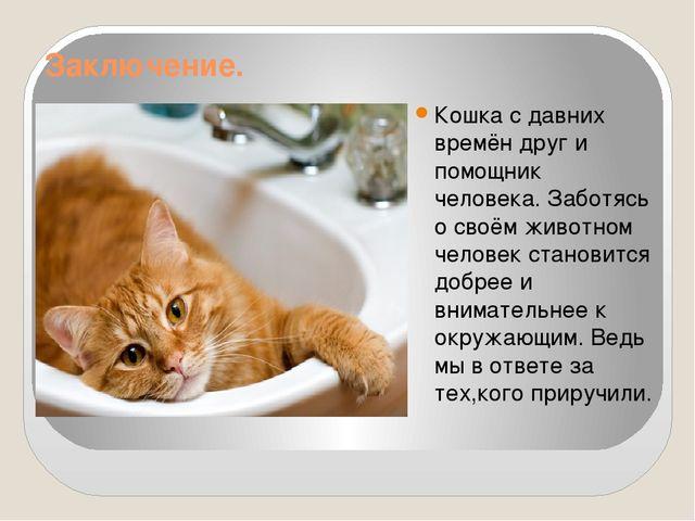 Заключение. Кошка с давних времён друг и помощник человека. Заботясь о своём...