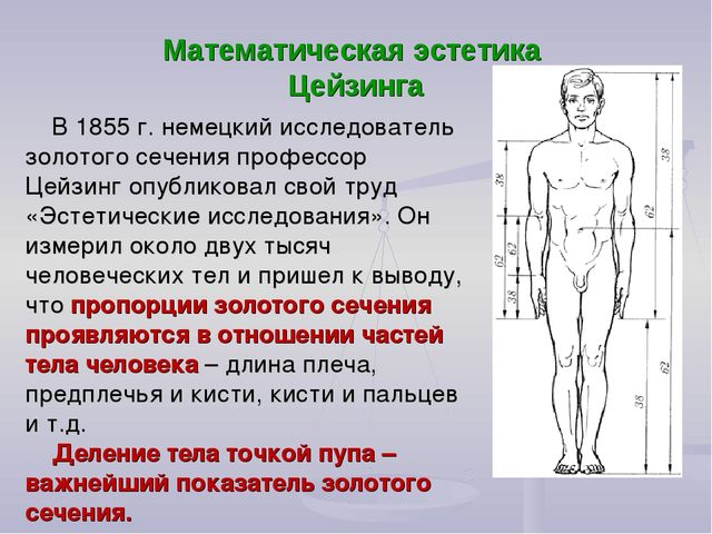 Математическая эстетика Цейзинга В 1855г. немецкий исследователь золотого се...