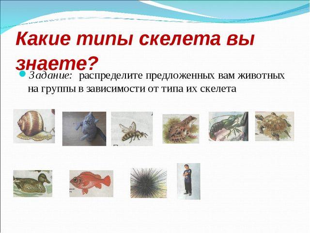 Какие типы скелета вы знаете? Задание: распределите предложенных вам животных...