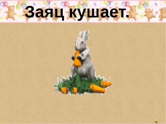 Заяц кушает.