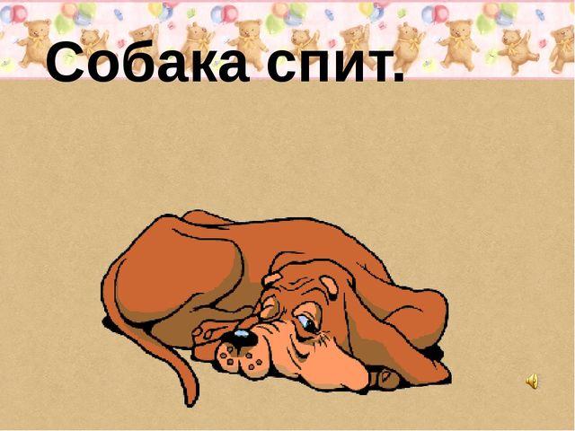 Собака спит.